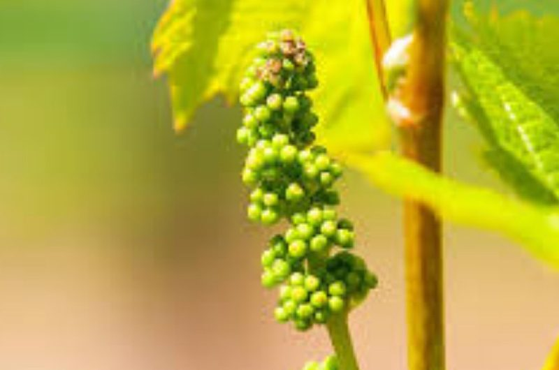 Amateur de vin : mieux comprendre le naturel, le bio et le biodynamique